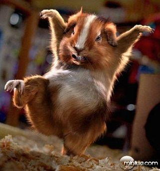 karate-kid-dos-animais