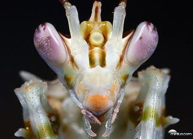 Alien-Looking-Bug-Insect-4