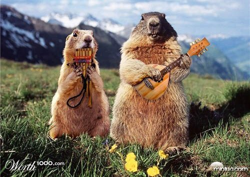 concert_marmots