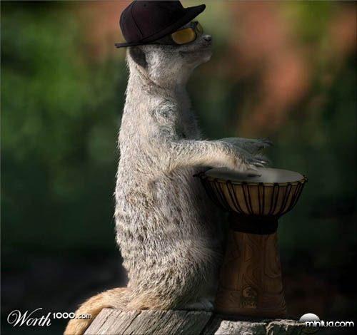 meercat_drummer