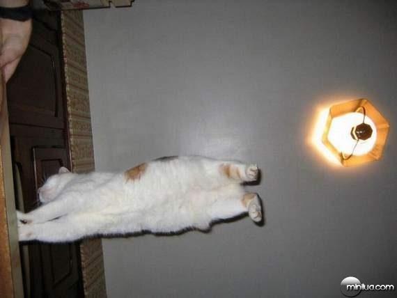 cats22
