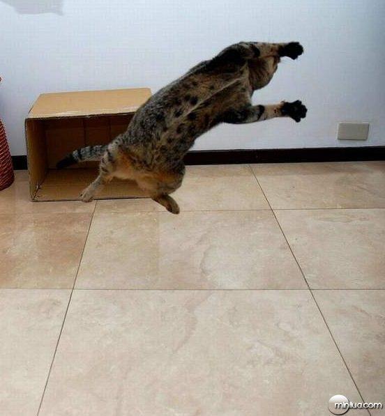 cats24