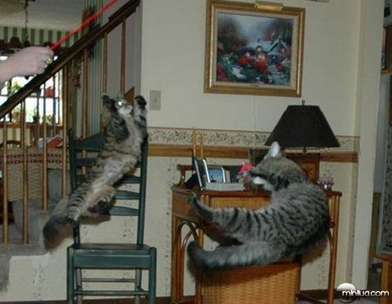 cats34