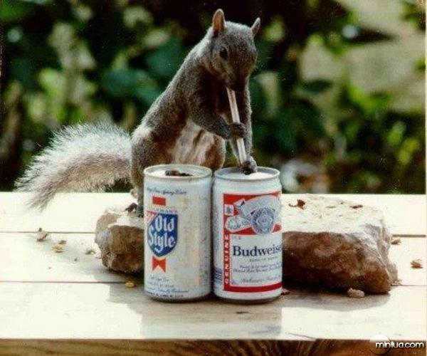 animais bêbados