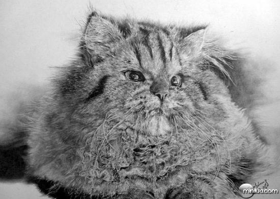 cat-drawings-04