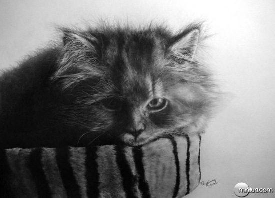 cat-drawings-08