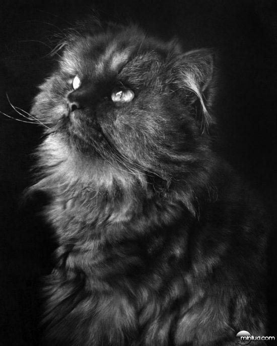 cat-drawings-15
