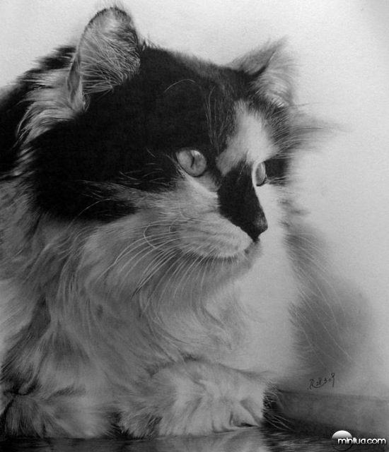 cat-drawings-16