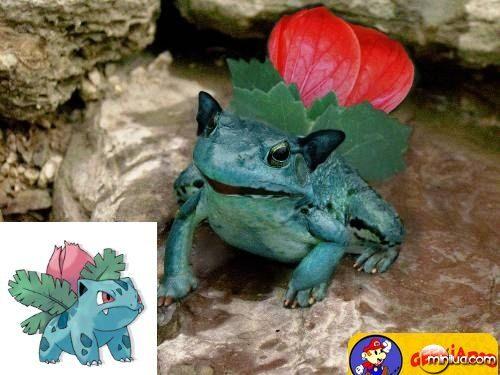 pokemons-da-vida-real-nerd-geek-geekiados- (4)