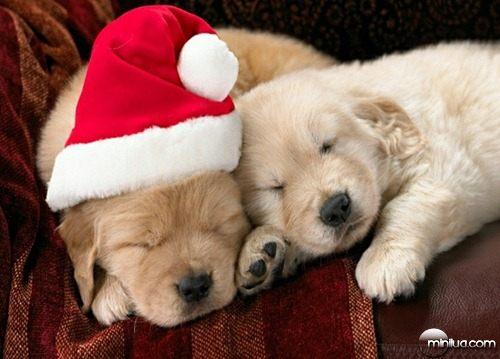 Cachorros_Dormindo_com_Touca_do_Papai_Noel_Natal_6899827a70