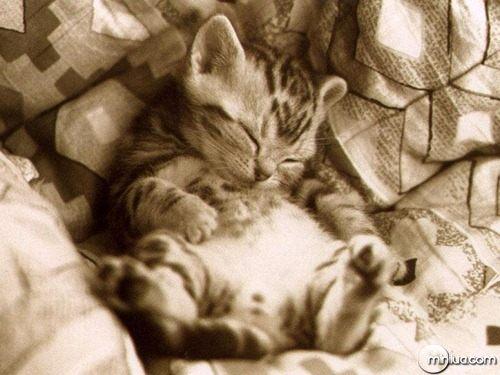 lazy-kitten