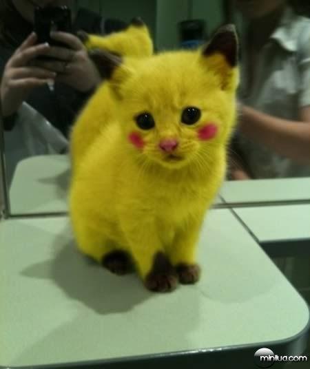 a98100_cat_11-pikachu