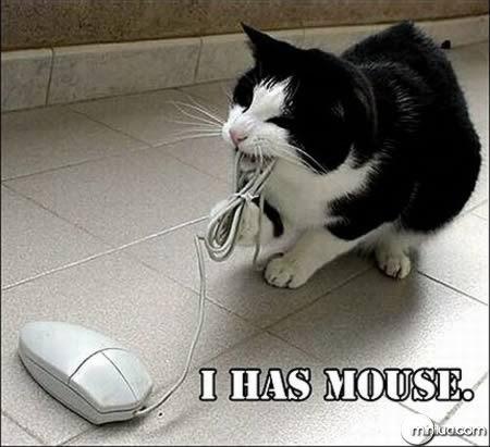 a98100_cat_3-mouse