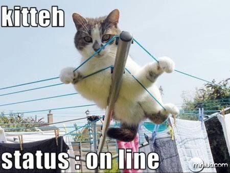 a98100_cat_4-online