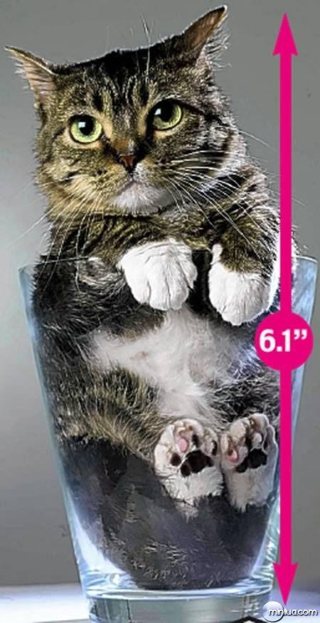 a98100_cat_8-smallest