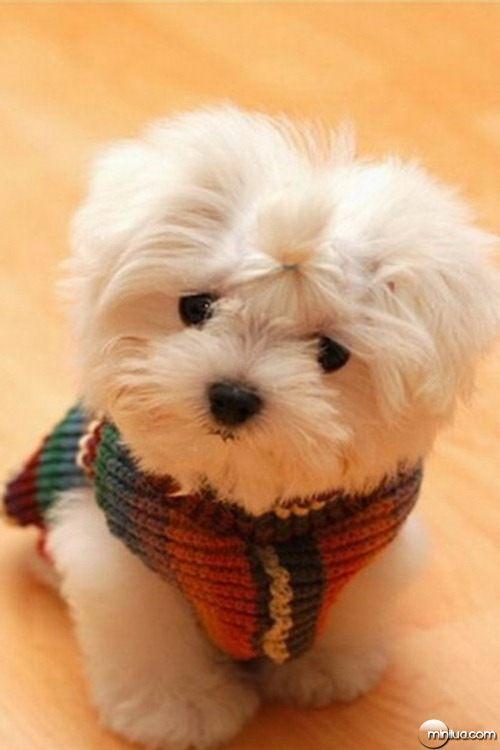 Cute-Dog-f