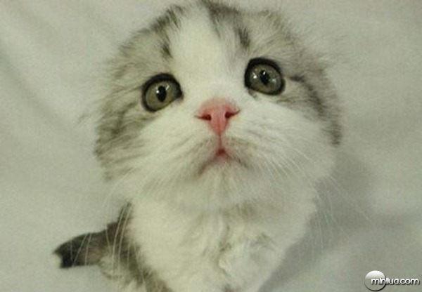 gato_engracado