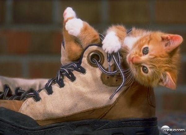 gato_meia_chule