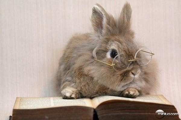 this-bunny-just-took-a-break-from-his-homework-to-9485-1346360543-12[5]