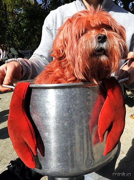 US-HALLOWEEN-DOG PARADE
