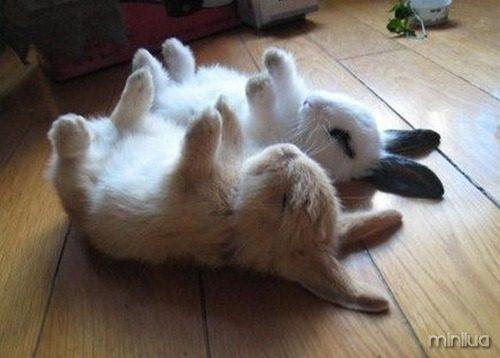 cute_animals_25