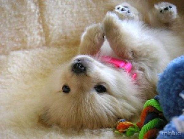 Filhote-de-cachorro