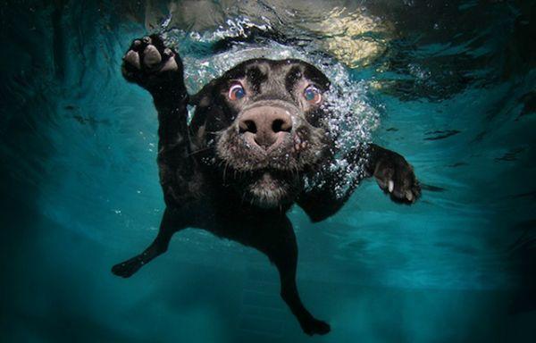 cachorros_nadando_Seth-Casteel-4-610x390