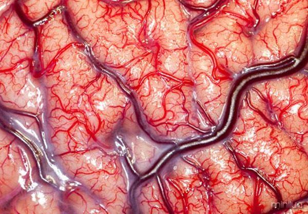 Fotos-mais-incríveis-ciência-2012-14