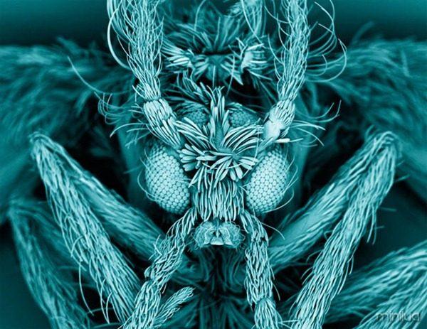 Fotos-mais-incríveis-ciência-2012-15
