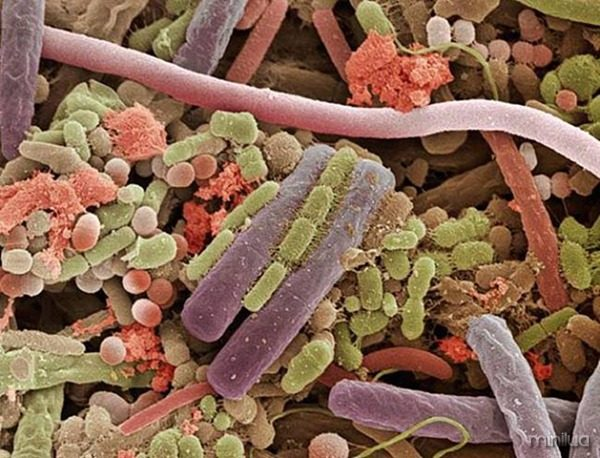 bacteria na lingua