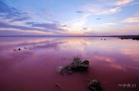 lago rosa reflexo_thumb[2]