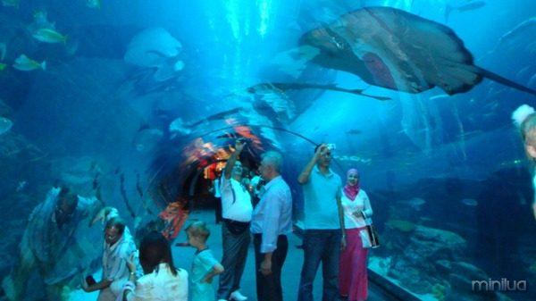 dubai-aquarium-a-underwater-zoo