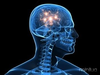 1352758494195-cerebro