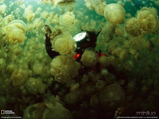 fotos da natgeo agua viva[3]