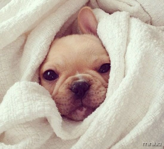 snuggly-cute-puppy