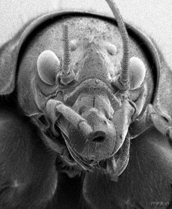 insetos-feios