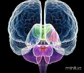 brain_hemispheres_thumb