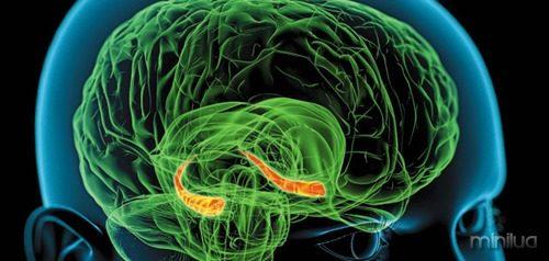 Memory-hippocampus-brain-631