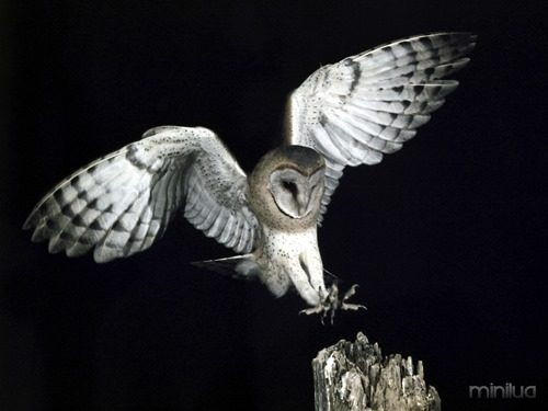 OwlNEWS