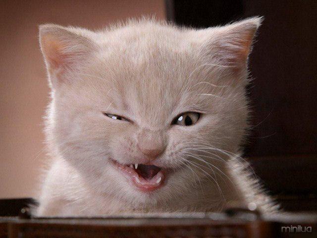gato 6