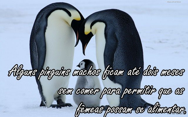 Papel-de-Parede-Pinguim-10