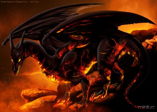 ember_dragon_by_isismasshiro-d4tgo65