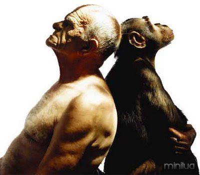 homem e macaco