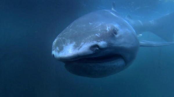 137590322843814126703601197_Alien_Sharks_Megamouth