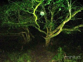 spooklights3