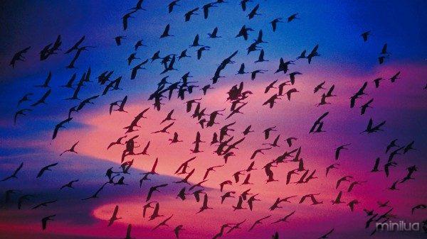 Birds-migratory
