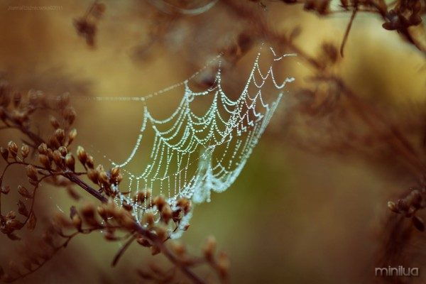 spider_web_in_dew_drops-other