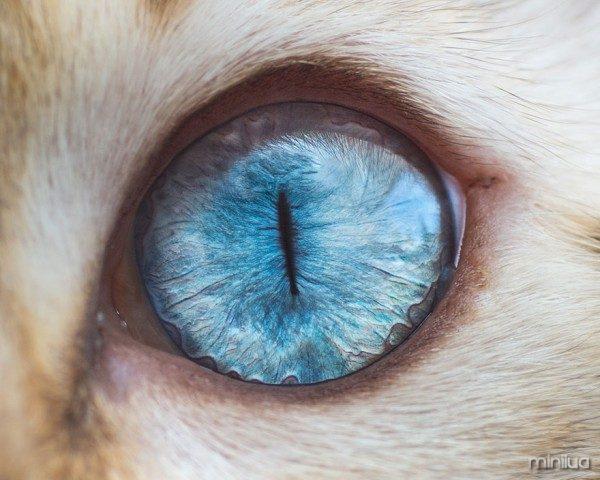 15-Macro-Shots-of-Cat-Eyes__880