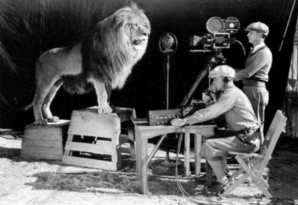 Filmando a Leo el León para para el clásico logo de MGM.