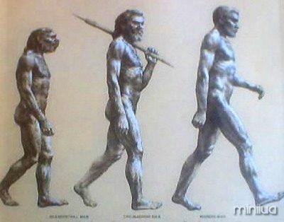 Evolução Std.Jpg